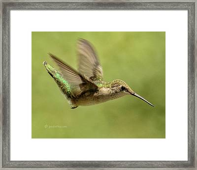 Untitled Hum_bird_one Framed Print