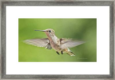 Untitled Hum_bird_three Framed Print