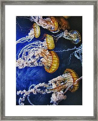 Untitled Framed Print by John Scharle