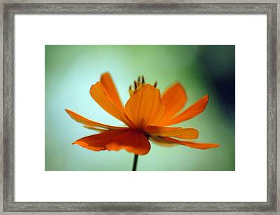 Untitled Framed Print by Lucas Armstrong