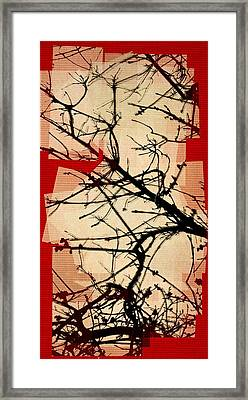 Untitled N Framed Print by Rene Avalos