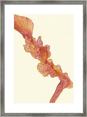 Dancer - #ss14dw048 Framed Print by Satomi Sugimoto