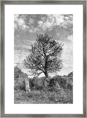 Untitled#59 Framed Print by Floyd Menezes