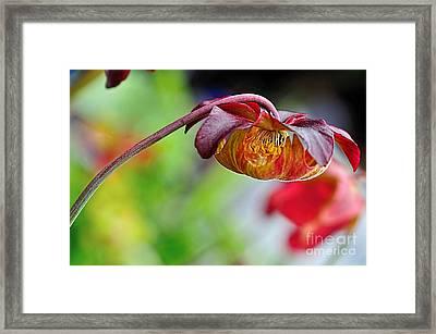 Unusual Aquatic Flower Framed Print by Kaye Menner