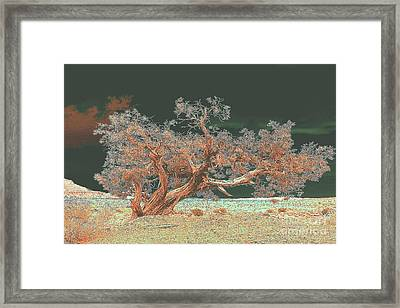 Unusual Tree Framed Print