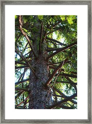 Up A Tree Framed Print