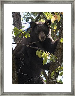Up A Tree Framed Print by Mike Dawson