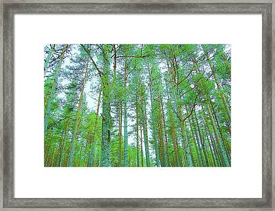 Up Above Framed Print by HweeYen Ong