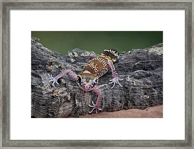 Framed Print featuring the photograph Up And Over - Gecko by Nikolyn McDonald