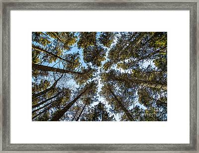 Up Framed Print by Benjamin Williamson
