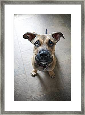 Up Close And Persoanl Framed Print by Emily Livolsi