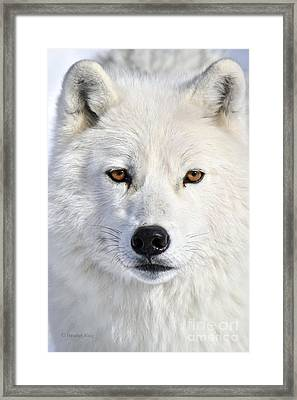Up Close And Personal Framed Print by Heather King