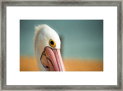 Up Close And Personal With My Pelican Friend Framed Print