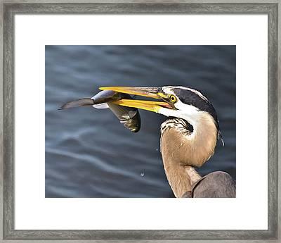 Up Close Catch Framed Print