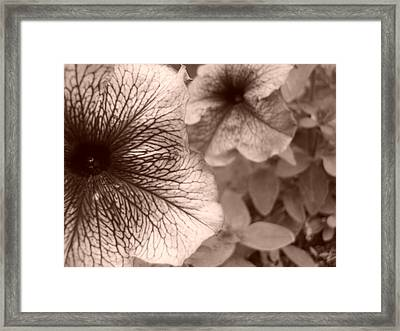 Up Close Framed Print by Jennifer Compton