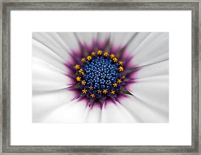 Up Close Framed Print by Maria Dryfhout