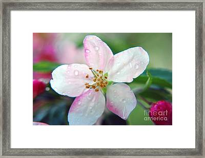 Framed Print featuring the photograph Up Close Spring Blossom  by Lila Fisher-Wenzel