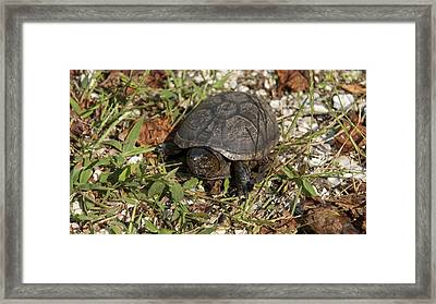 Up Close With Slow Framed Print by Charles Kraus