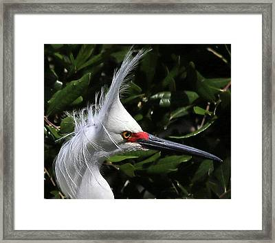 Up From A Nap Framed Print