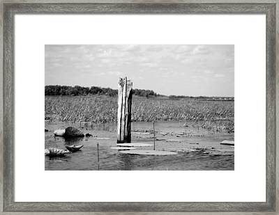 Up From Below Framed Print by Jack Norton