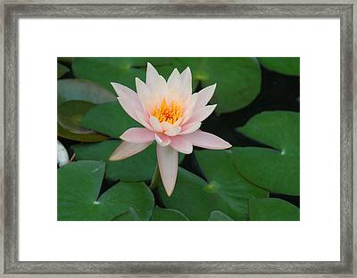 Up From The Depths Framed Print by Suzanne Gaff