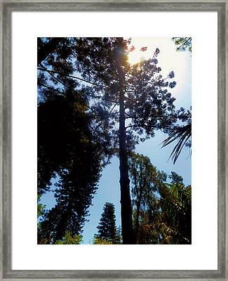 Up In The Sky Trees Framed Print