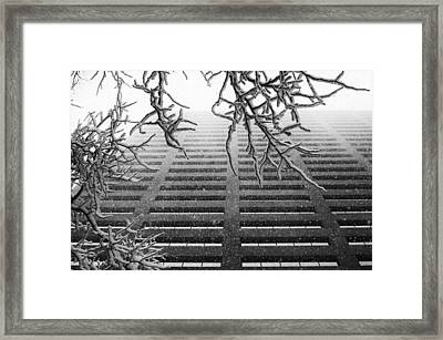 Up In The Snow Framed Print