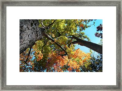 Framed Print featuring the photograph UP by Joseph G Holland