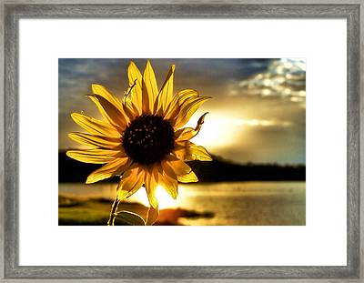 Up Lit Framed Print