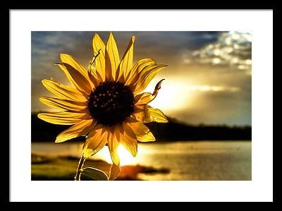 Sun Photographs Framed Prints