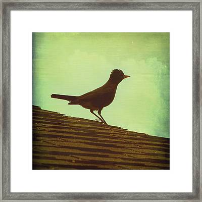 Up On A Roof Framed Print by Amy Tyler