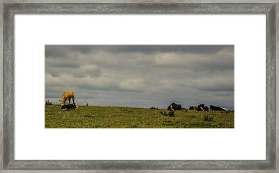Up On The Hill Framed Print by Martin Newman