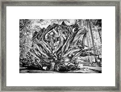 Up Rooted Framed Print