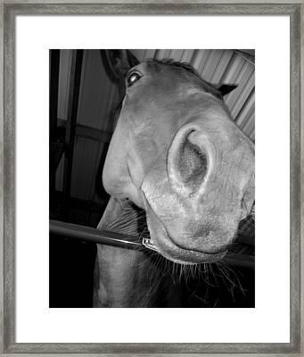 Up The Nose Framed Print by Lindsey Orlando