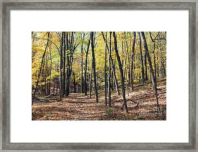 Up The Woodland Trail Framed Print