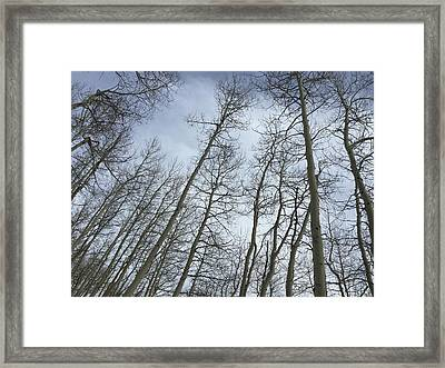 Up Through The Aspens Framed Print by Christin Brodie