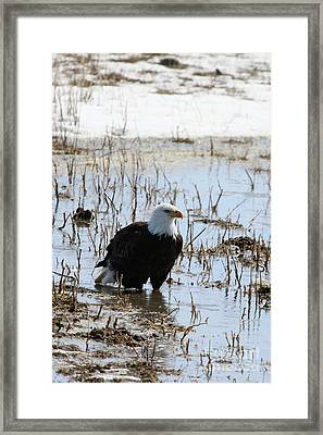 Up To His Knees Framed Print