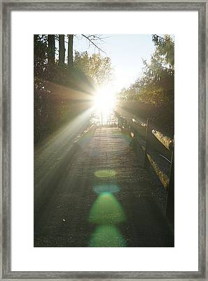 Up To The Sun Framed Print by Lilia D