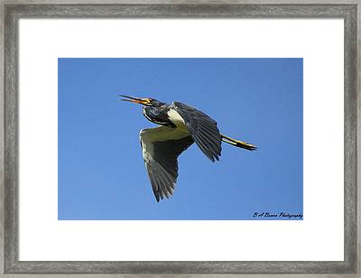 Up Up And Away Framed Print by Barbara Bowen