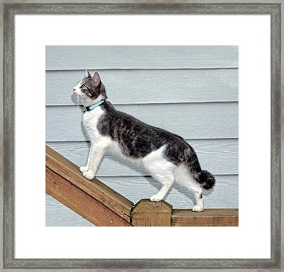 Up We Go Framed Print by Susan Leggett