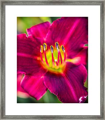 Upclose And Purple Framed Print