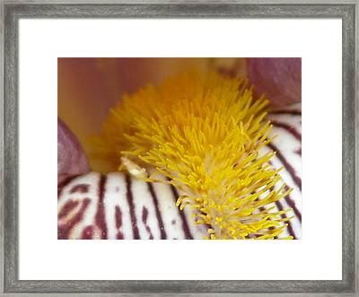 Upclose Iris Framed Print by William Thomas