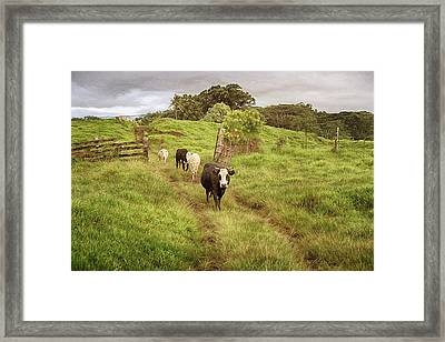 Framed Print featuring the photograph Upcountry Ranch by Susan Rissi Tregoning