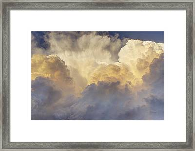 Updraft Of Cotton Framed Print