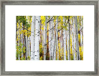 Uphill Framed Print by The Forests Edge Photography - Diane Sandoval