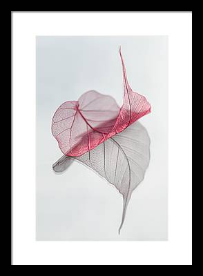 Fall Photographs Framed Prints