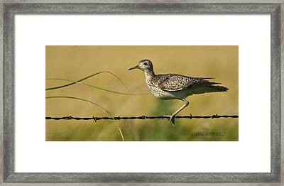 Uplland Sandpiper Framed Print by Don Durfee