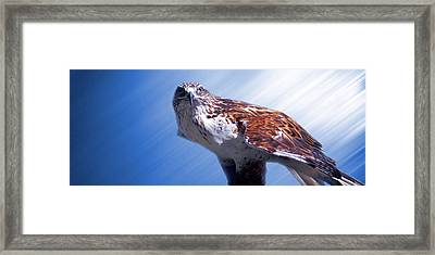 Upon His Perch Framed Print