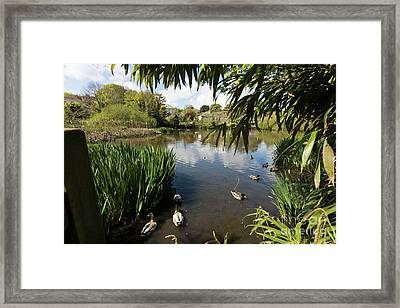 Upper Mill Pond Hayle Framed Print