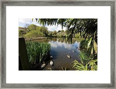 Upper Mill Pond Hayle Framed Print by Terri Waters